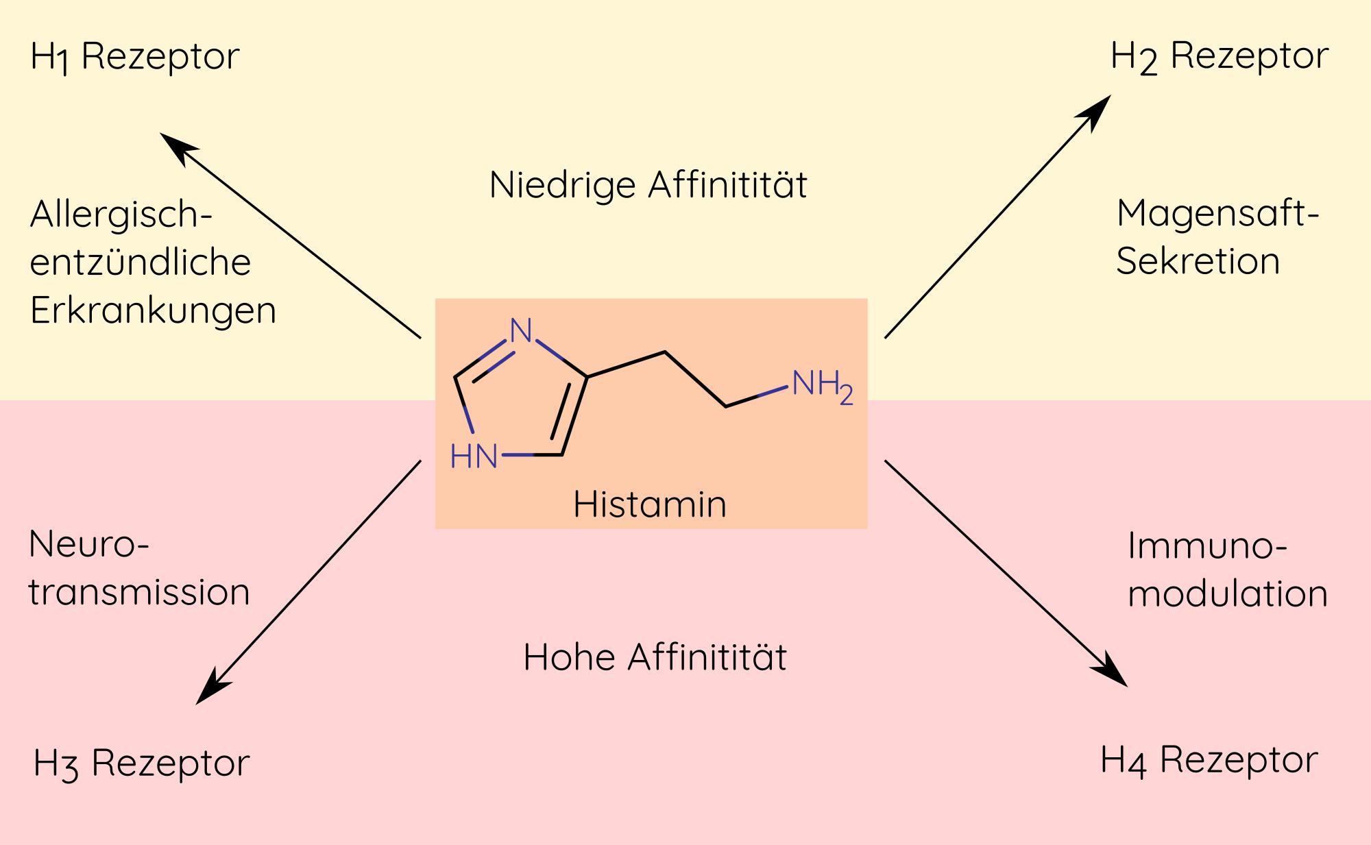 Auswirkungen von Histamin, die über die Histaminrezeptoren H1 bis H4 vermittelt werden