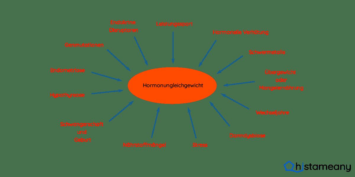 Faktoren, die zu einer Östrogendominanz führen können
