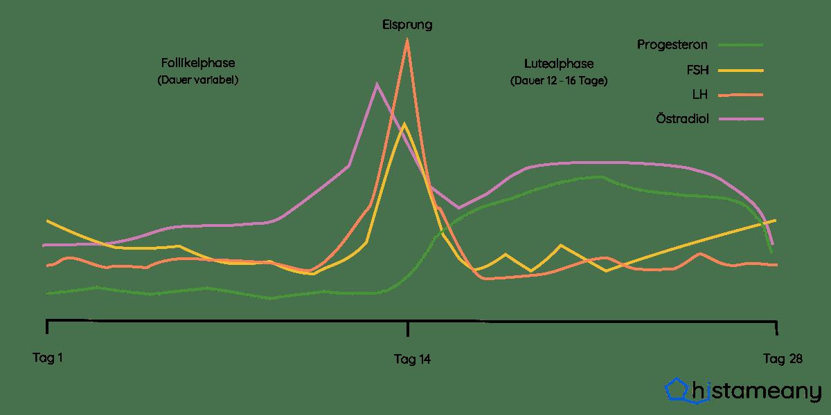 Hormonkurven im Monatsverlauf