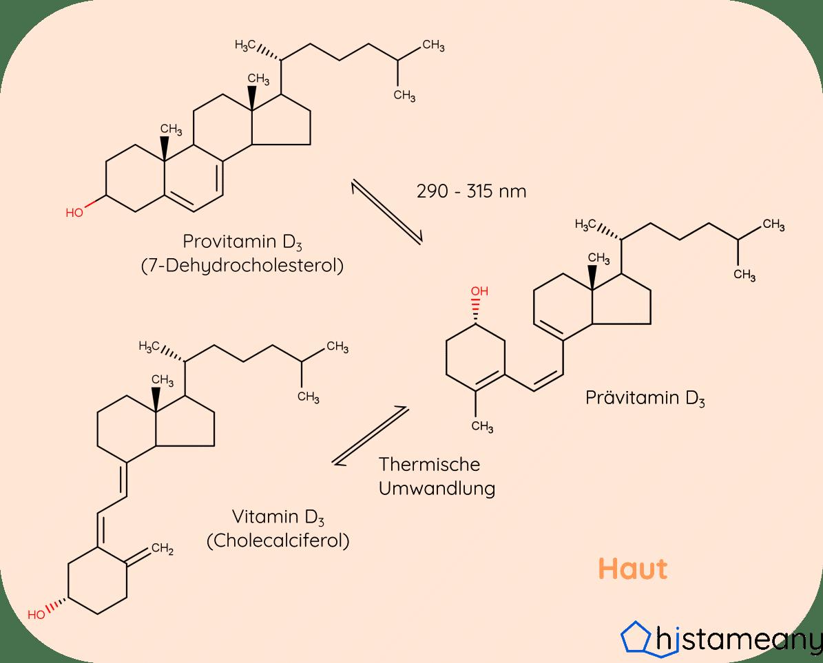 Vitamin D Bildung durch UVB Strahlung