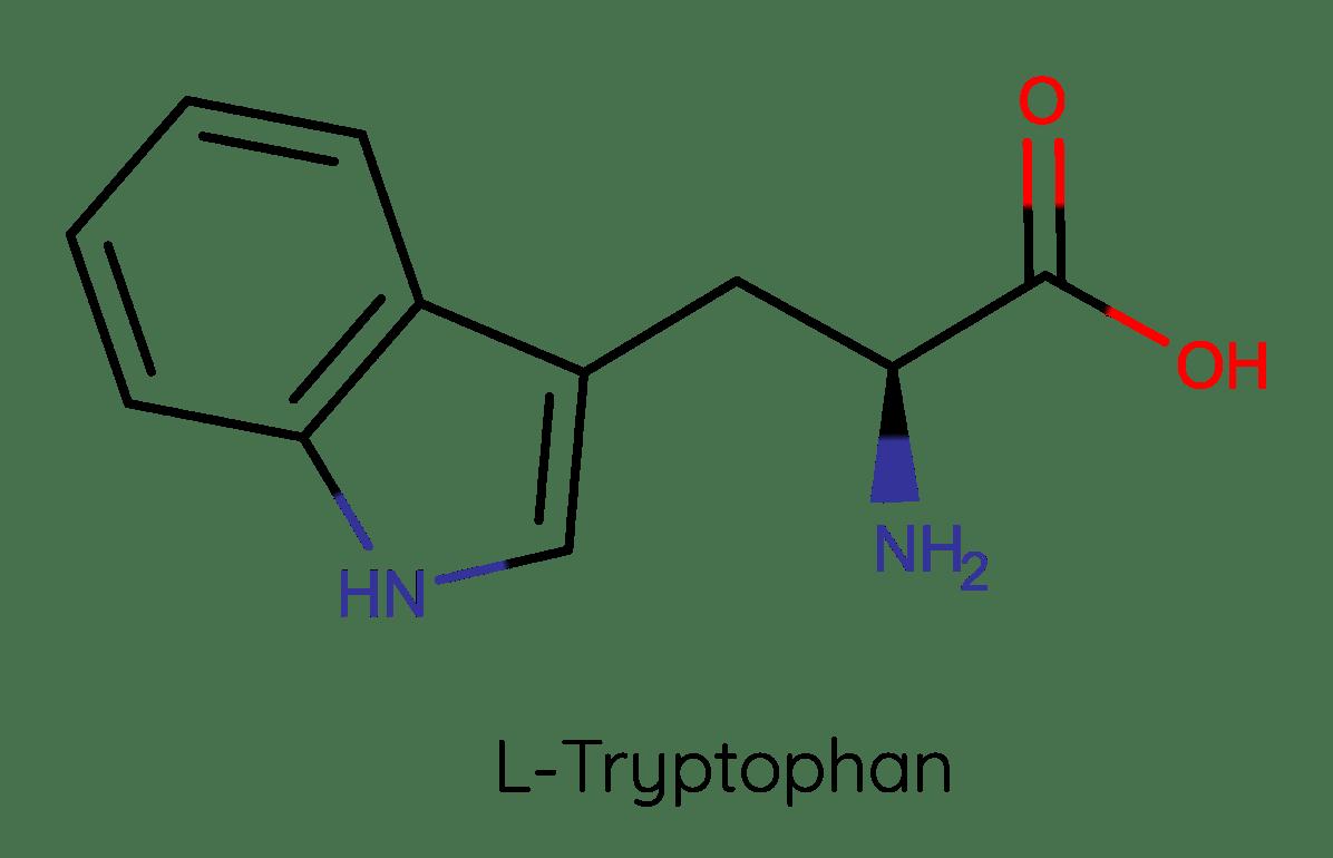 Strukturformel von L-Tryptophan. Die Aufnahme kann bei Fruktosemalabsorption gestört sein.