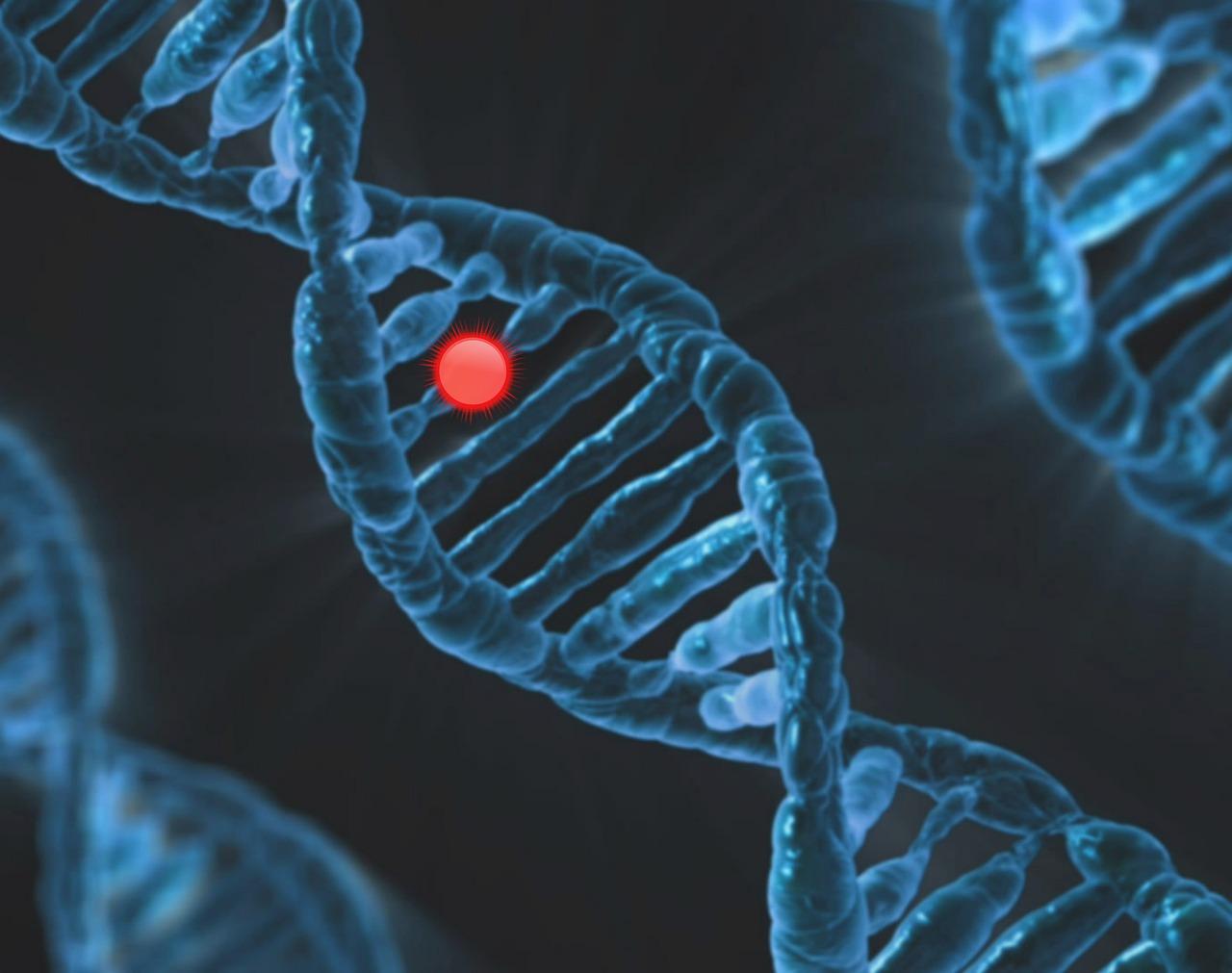 Neue Studie: Genetik bei Leaky Gut
